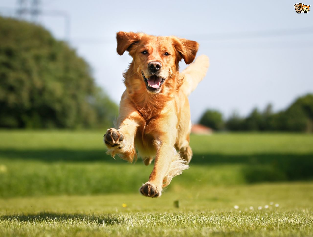 five-ways-to-make-life-easier-for-your-dog-with-allergies-this-summer-553e240f0cd3d