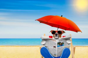 Dogs_Beach_Jack_Russell_terrier_Glasses_Umbrella_545690_1280x853