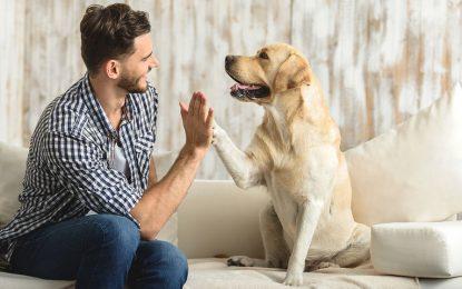 Διαβήτης και σκύλος, μια πολύπλοκη ασθένεια. Χρήσιμες συμβουλές!