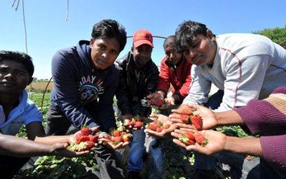 ΟΑΕΔ για πρόσφυγες & μετανάστες: Κυβερνητικό σχέδιο για προσλήψεις στον αγροτικό τομέα