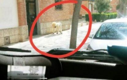 Δεν άντεξε την καραντίνα, ντύθηκε σκύλος και βγήκε βόλτα!