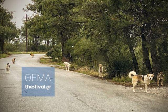 Θεσσαλονίκη: Δείτε VIDEO με αγέλες σκύλων που κινούνται στο δάσος του Σέιχ Σου