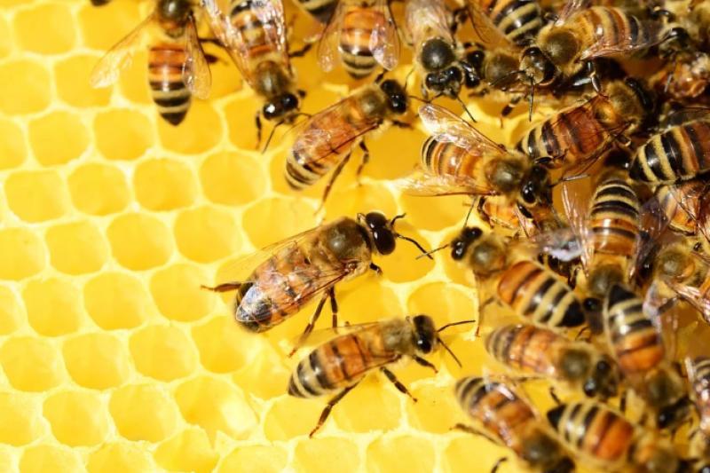 Παγκόσμια ημέρα μέλισσας: Οι ακούραστοι εργάτες της φύσης. Γιατί εξαρτιόμαστε όλοι από αυτές.