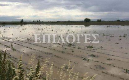 Σέρρες: Βούλιαξαν στο νερό 3 χιλ. στρέμματα βαμβακιού στο Μητρούσι