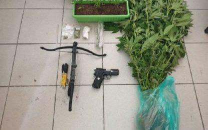 Σέρρες: 46χρονος καλλιεργούσε χασισόδεντρα στην αυλή του- Είχε βαλλίστρα και αεροβόλο (Εικόνα)