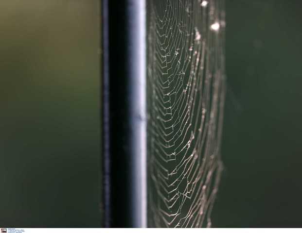 """Τρόμος από τσιμπήματα αράχνης: Κινδύνευσαν βρέφος και μια γυναίκα από τη """"μαύρη χήρα""""(Βίντεο)"""