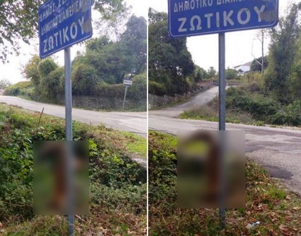 Γιάννενα: Κρέμασε αλεπού σε πινακίδα! Η εικόνα που πάγωσε τους περαστικούς και προκάλεσε οργή