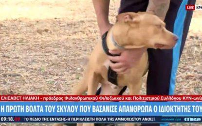 Νέο ξεκίνημα για τον σκύλο που βασανίστηκε άγρια από τον ιδιοκτήτη του στην Κρήτη