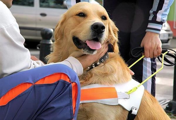 Therapy Dog's: τετράποδοι…θεραπευτές για μία βελτιωμένη ανθρώπινη υγεία και ψυχολογία. (βίντεο)