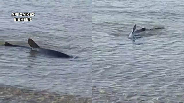 Καρχαρίας εμφανίστηκε στην παραλία Καραθώνας στο Ναύπλιο