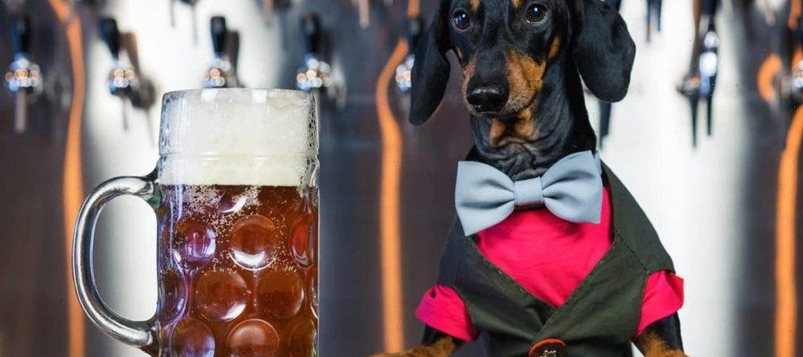 Εταιρία έφτιαξε μπύρα για σκύλους και ψάχνει σκύλους δοκιμαστές με 20.000 μισθό