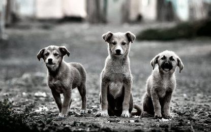 Παγκόσμια ημέρα αδέσποτων ζώων. Μία ημέρα που δεν θα έπρεπε να υπάρχει…