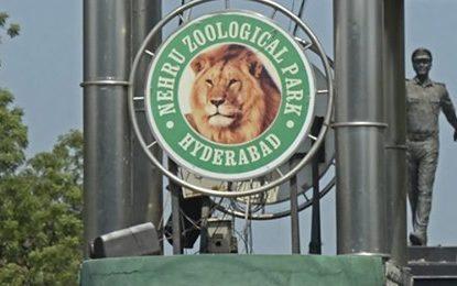 Θετικά στον κορωνοϊό και τα λιοντάρια σε ζωολογικό πάρκο της Ινδίας